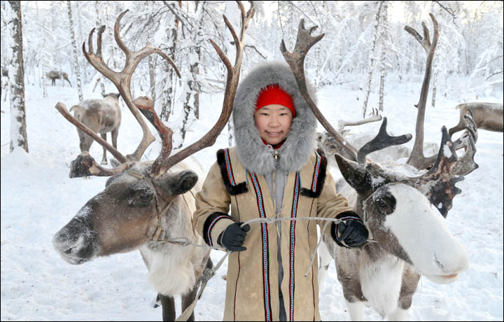 Wolves preying on reindeer herds threaten seasonal joy in remote Siberian villages