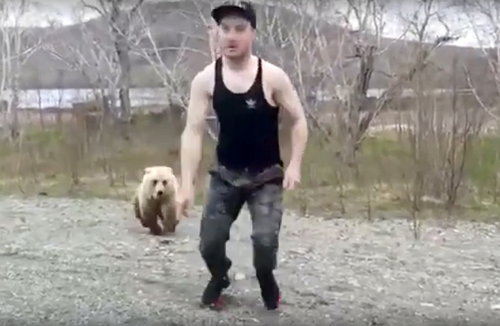 A careless tourist teases death by getting out of a car to play with a wild brown bear