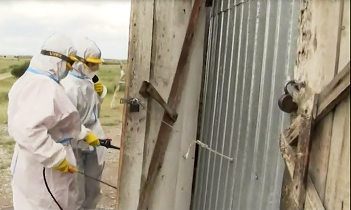 Russia begins mass vaccination against bubonic plague in danger areas near border border with Mongolia
