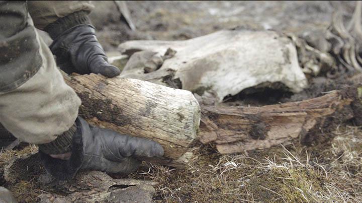 Arctic island mammoth shows strongest evidence yet of human slaughter and butchering