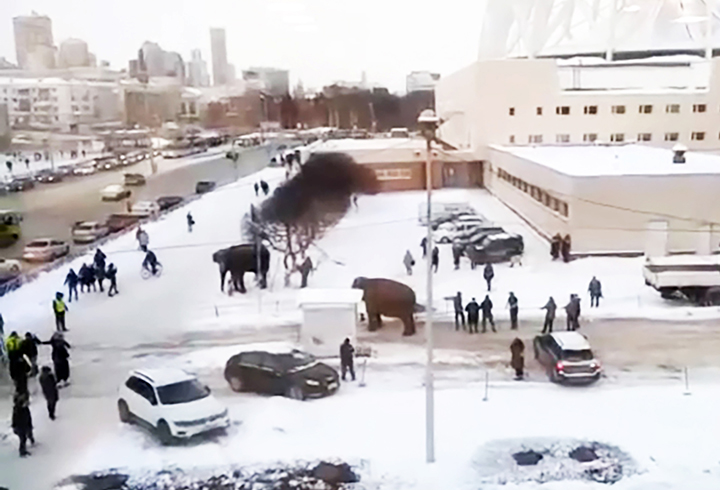 Indian elephants escape circus, go for a snow bath in Ekaterinburg